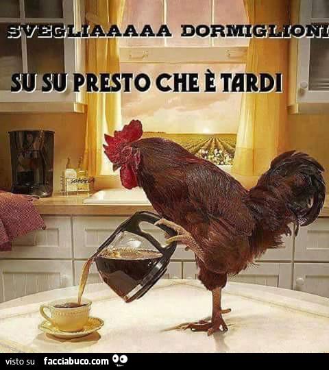 Svegliaaa Gallo Caffe Facciabuco Com