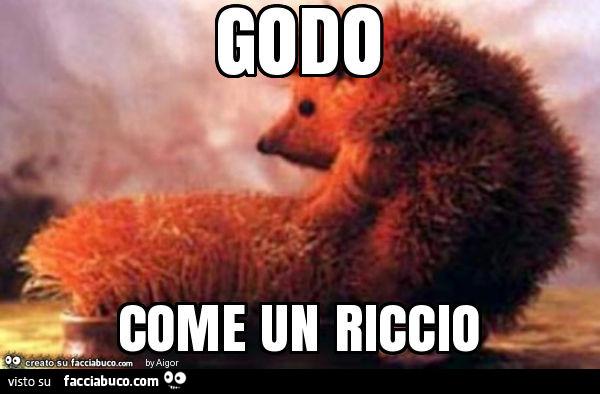 7537033835-godo-come-un-riccio-vaccata-e