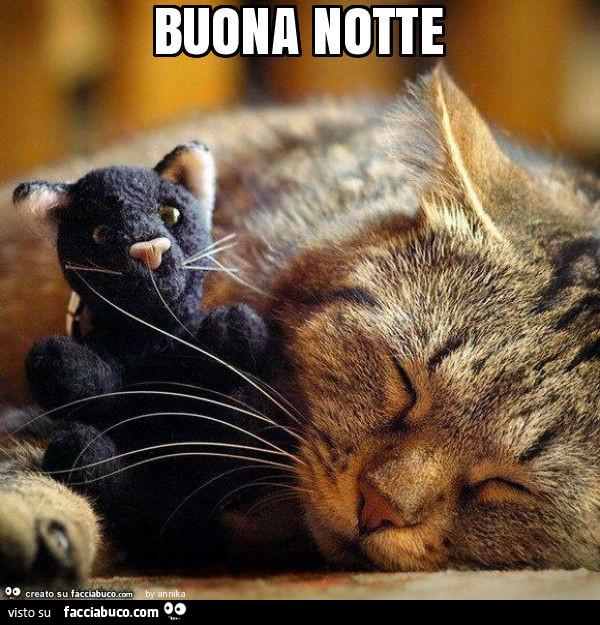 Gatto Dorme Col Peluche Buona Notte Facciabuco Com