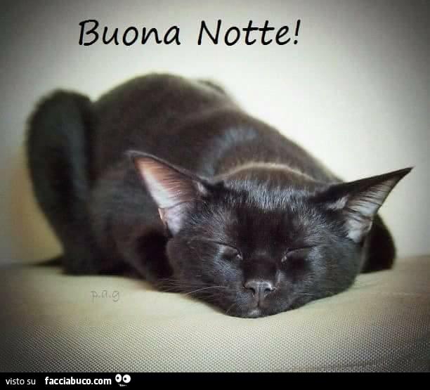 Gatto Che Dorme Buona Notte Facciabucocom